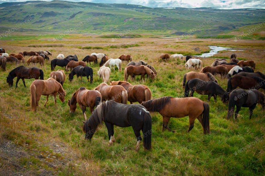 عکس اسب در چمنزار